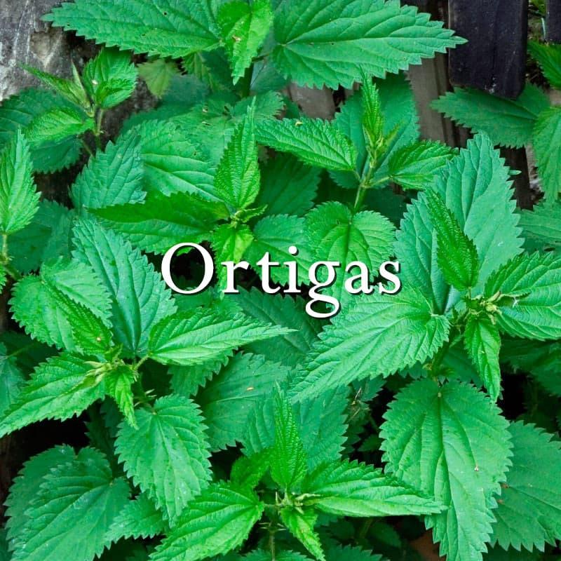 Ortigas